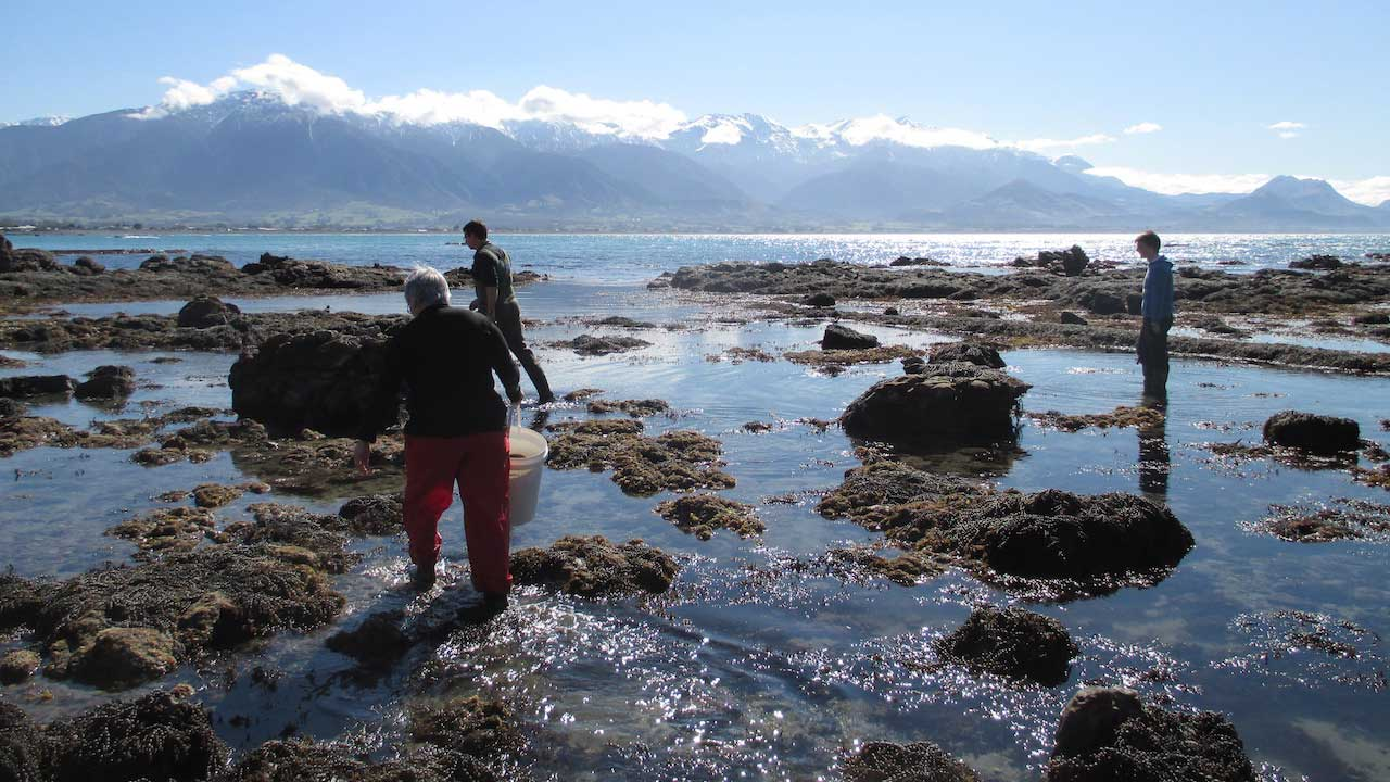 Three people wade in ankle deep water with jutting rocks in New Zealand