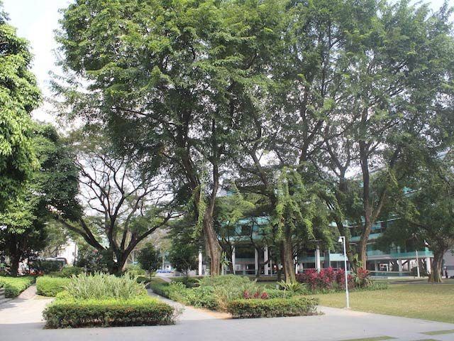 Lush greenery on Singapore Management University's campus