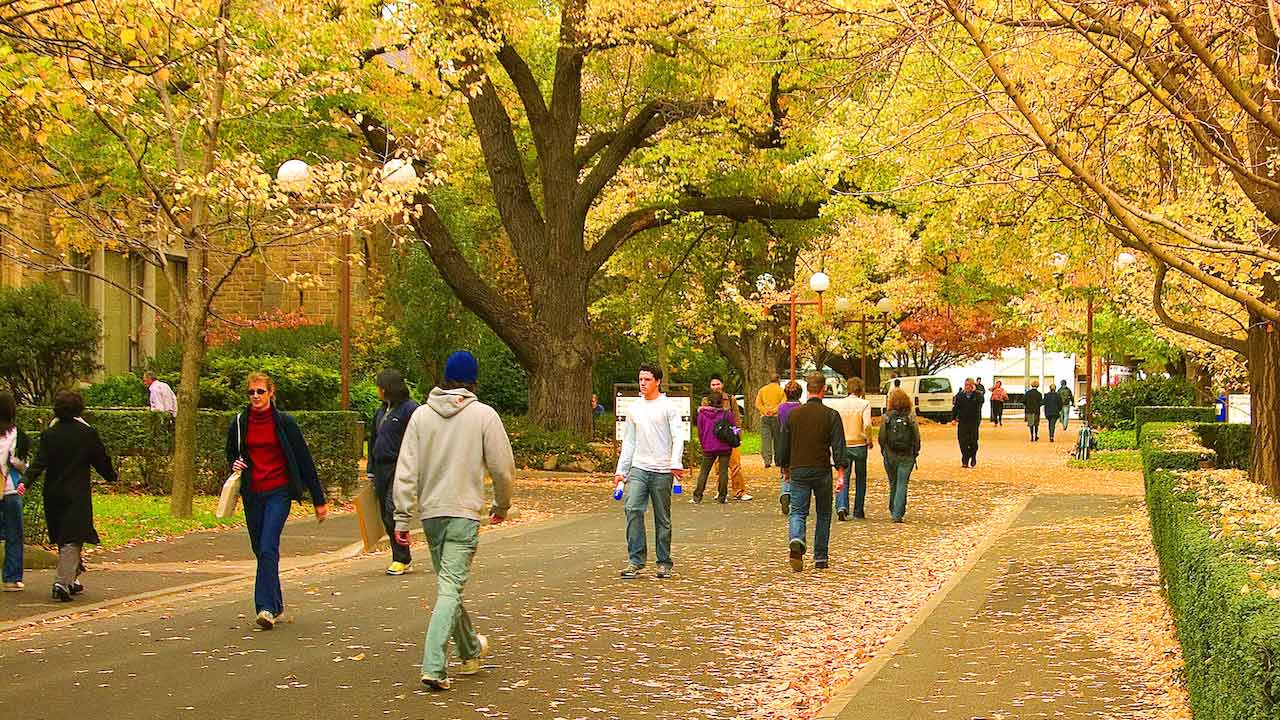 People stroll along a pathway amongst yellow and orange autumn leaves