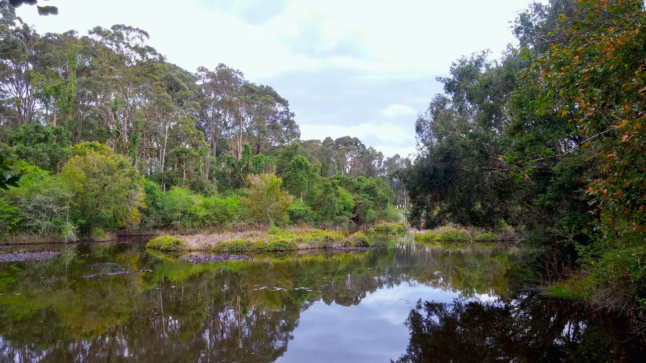 Trees and shrubbery reflected in a pond in Newcastle, Australia