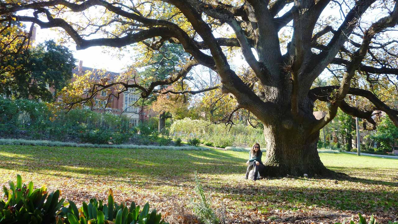 A woman sits under a sprawling tree in a park on a sunny day in Perth, Australia
