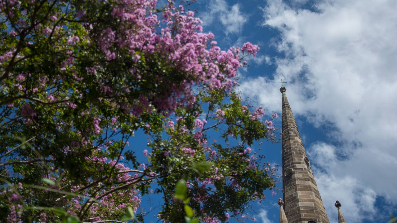 Purple flowers bloom on a tree that shields a portion of the church on University of Notre Dame Sydney's campus