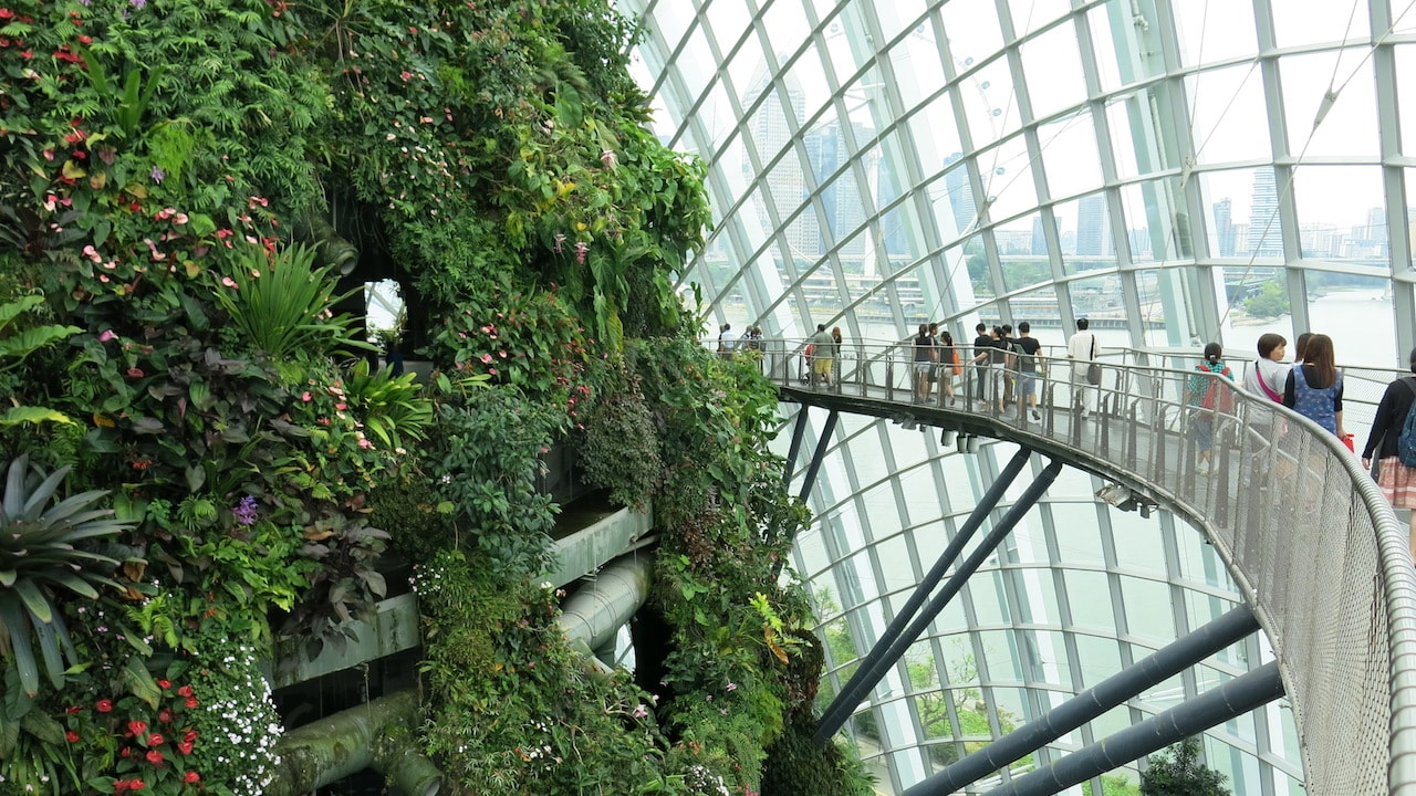 People walk on a bridge observing the lush greenery inside a glass dome in Singapore