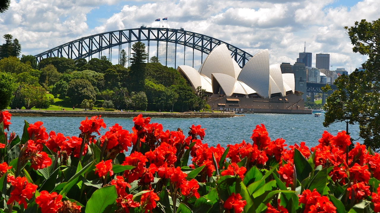 View of the Sydney Opera House and Harbour Bridge with bright red flowers in the foreground
